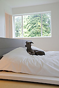 Freud, the dog, in the master bedroom at Warren House, Wayne McGregor's Dartington Estate home in Devon<br /> Vanessa Berberian for The Wall Street Journal