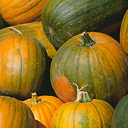 Massachussets, Old Deerfield; Fall Harvest Pumpkins At Roadside Stand<br />