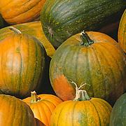 Massachussets, Old Deerfield; Fall Harvest Pumpkins At Roadside Stand<br />
