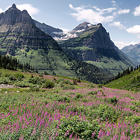 View of the mountains and wildflowers from Going-to-the-Sun Road, Glacier National Park, Montana