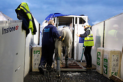 Lima du Barthas of Pereira Maritza (BEL)<br /> Departure of the horses from Liege Airport to Lexington<br /> Alltech FEI World Equestrian Games - Kentucky 2010<br /> © Dirk Caremans