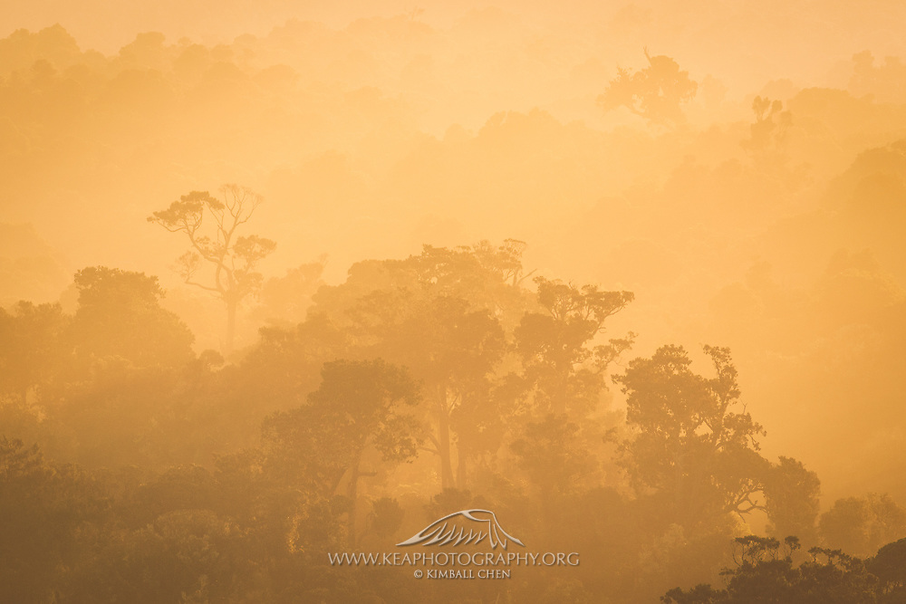 Intense glow from the sun penetrates the coastal forest along the Catlins, South Island, New Zealand