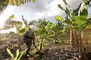 More Telemaque, 60 years, a farmer in his banaba plantation