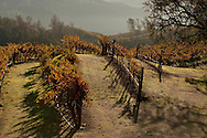 Somerston Vineyards, Napa Valley, California