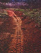 Mountain bike tracks in the dirt at Arcadia Lake near Edmond, OK
