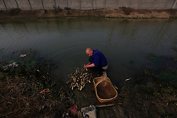 Chinese villager Dong Chongxin of Dongtan Village washes lotus roots in a polluted river where across is the Jinhuarun Chemical Industry plant in Zekou Town, Qianjiang City of Hubei Province, China 15 January 2013. Dong used to breed fish in fishing ponds by the river but now the water is so polluted from discharge from the chemical plant that all the fish have died and the ponds are now just muddy swamps where only lotus roots will grow in them. While the heavy smog in Beijing and much of northern China in recent days have caused alarm among residents and renewed scrutiny on the pollution woes of the country, villagers in a small town of Hubei Province have been grappling with severe air, water and noise pollution on a daily basis over the past two years. China's Xinhua news reported 04 January 2013 that more than 60 cancer deaths in various villages of Zekou Town has been caused by the heavy pollution from the chemical industry park nearby. About 20 or more chemical plants built around the villages of Dongtan, Xiangnan, Zhoutan, Sunguai, Qingnian and others over the past two years has created huge increases in noise, air and water pollution. Many villagers complained of intensifying respiratory, heart, skin and circulatory illnesses caused by the pollution and a large spike in cancer diagnoses and deaths since the factories were built. .