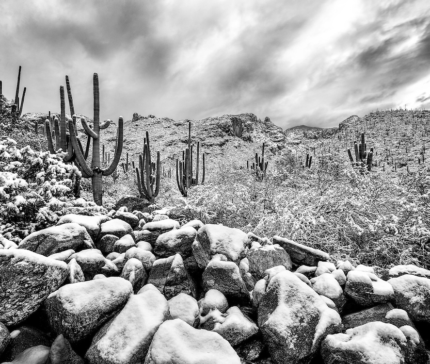 Finger Rock Trail, Tucson AZ, Catalina Mountains, Snow, Saguaro, BW
