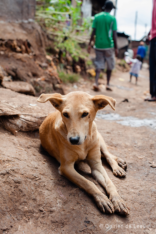 A dog lies in a street in Kibera slum, Kenya