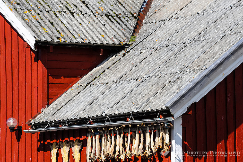 Norway, Lofoten. Henningsvær is a fishing village on the southern tip of Austvågøya. Fish to dry.