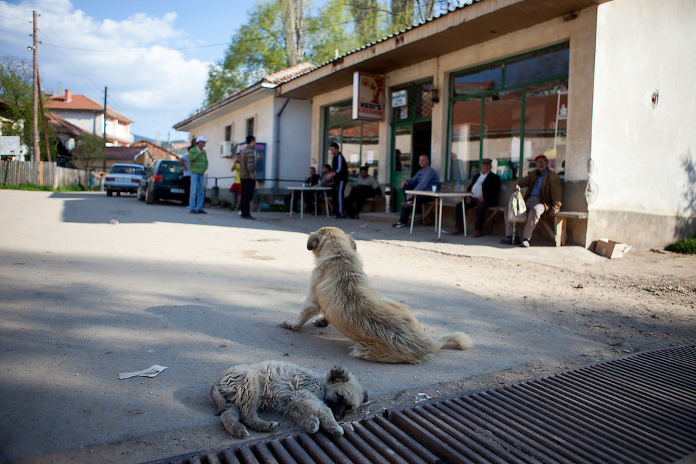 Dogs and a group of men talking in front of the local grocery store in the city of Crnik. Crnik has almost 90% of unemployment.