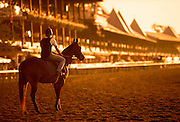 Morning workout at Saratoga Racetrack in Saratoga, NY.