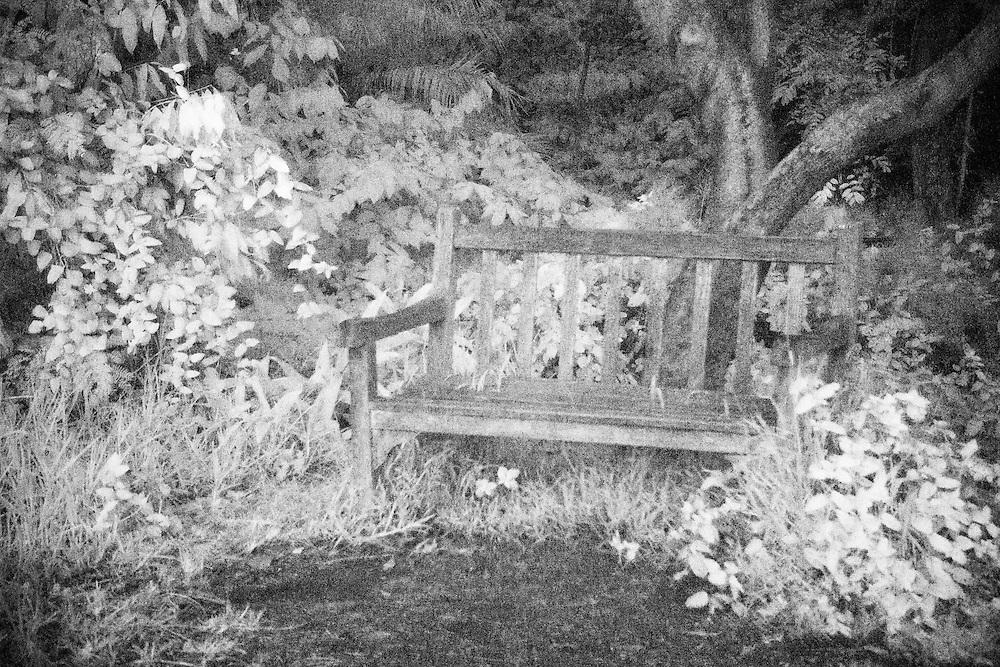 Tranquil Bench - Fullerton Arboretum CA - Infrared Black & White