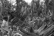 Popula&ccedil;&otilde;es Tradicionais quilombolas de Alc&acirc;ntara no Maranh&atilde;o. A comunidade QuilombolaTiquara situa-se a cerca de 50 quil&ocirc;metros da cidade de Alc&acirc;ntara e possui aproximadamente 80 fam&iacute;lias.  A comunidade j&aacute; &eacute; certificada pela funda&ccedil;&atilde;o Palmares como quilombola e atualmente (mar&ccedil;o de 2015) o processo de titula&ccedil;&atilde;o encontra-se em andamento. A comunidade n&atilde;o est&aacute; na regi&atilde;o considerada Territ&oacute;rio Etnico.<br /> Eliane Ernestina Pinheiro de 38 anos, sua filha Priscila Pinheiro Pereira de 12 anos e sua m&atilde;e In&aacute;cia Raimundo Rodrigues , quilombolas de Tiquara limpando a ro&ccedil;a