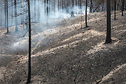 Friday, July 31, 2015<br />