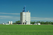 Hightroughput grain elevator and young cereal crop<br /> Fannystelle<br /> Manitoba<br /> Canada