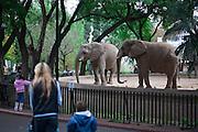Buenos Aires, Argentina...Jardim Zoologico, ele e o segundo zoologico mais visitado do mundo. Possui grande variedade de animais provenientes da Argentina e de outros países. Na foto elefantes...The Buenos Aires Zoo covers 18 hectares (44 acres) in the Palermo district in Buenos Aires, Argentina. In this photo elephants...Foto: JOAO MARCOS ROSA / NITRO