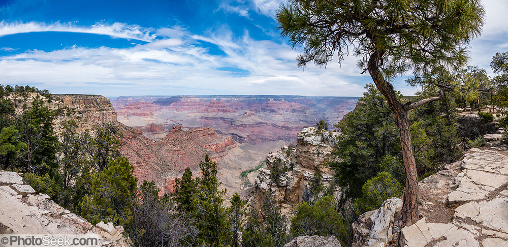 A pine tree clings to Yavapai Point, on the South Rim of Grand Canyon National Park, Arizona, USA. Starting at least 5 to 17 million years ago, erosion by the Colorado River has exposed a column of distinctive rock layers, which date back nearly two billion years at the base of Grand Canyon. While the Colorado Plateau was uplifted by tectonic forces, the Colorado River and tributaries carved Grand Canyon over a mile deep (6000 feet), 277 miles  long and up to 18 miles wide. This image was stitched from multiple overlapping photos.