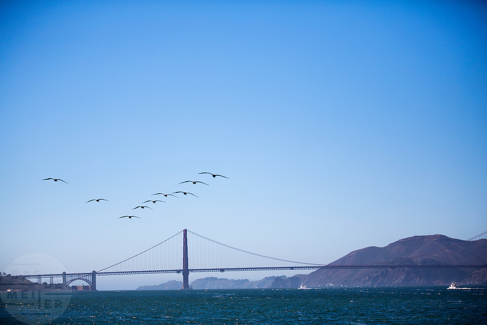 Bruine pelikanen vliegen over de baai van San Francisco. Tussen het Schiereiland van San Francisco en Marin County ten noorden van de metropool San Francisco ligt de Golden Gate Brug over de zeestraat Golden Gate, tussen de San Fransisco Bay en de Stille Oceaan. De brug is een van de zeven moderne wereldwonderen en is op 27 mei 1937 geopend. De tolbrug is een van de meest herkenbare symbolen van San Francisco en Californie.<br /> <br /> Brown pelicans fly at the San Francisco Bay. Between the San Francisco Peninsula and Marin County north of the metropolis of San Francisco's lays Golden Gate Bridge on the Golden Gate strait, between San Francisco Bay and the Pacific Ocean. Lies The bridge is one of the seven modern wonders of the world and was opened on May 27, 1937. The toll bridge is one of the most recognizable symbols of San Francisco and California.