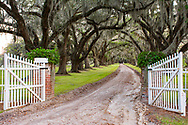 Beautiful live oaks and open gates welcome you home at this low country plantation.