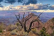 A juniper snag above the Colorado River along the South Rim of Grand Canyon National Park, Arizona