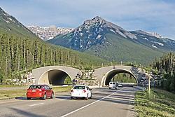 Wildlife overpass across the highway in Banff National Park