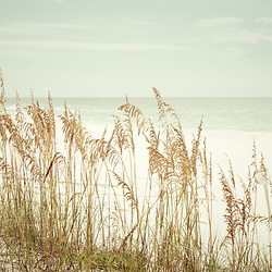 Beach sea oats grass beachscape Pensacola Beach Florida retro photo. Pensacola Beach is a coastal city in the Emerald Coast area of the Southeastern United States. Photo is high resolution. Copyright ⓒ 2018 Paul Velgos with All Rights Reserved.