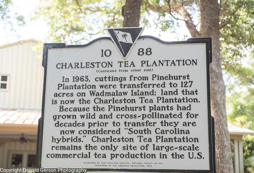 Charleston, SC Tea Plantation
