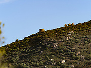 One of the ancient stone towers originally used by the Nuraghe, Sardinia's indigenous people.