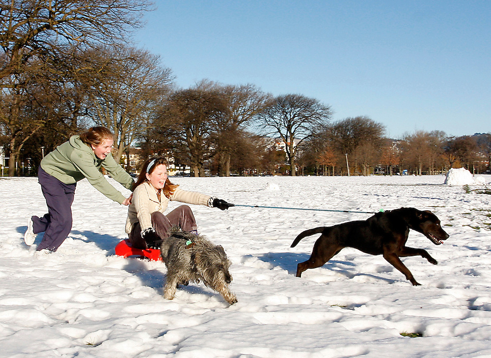 Girls being pulled on sled by dogs in the snow in Hagley Park, Christchurch, New Zealand, Wednesday, July 27, 2011.  Credit:SNPA / Pam Johnson