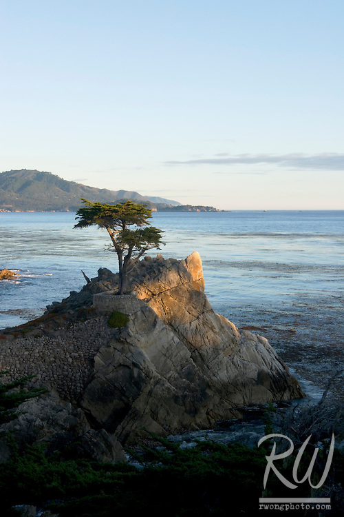 The Lone Cypress Tree Sunset, 17 Mile Drive, California