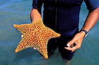 France - Département d'Outre mer de la Guadeloupe (DOM)- Basse Terre - Grand Cul de Sac Marin - Étoile de mer