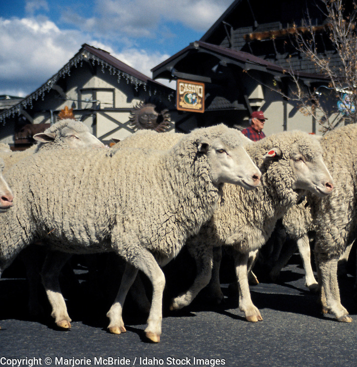 Trailing of the Sheep festival, Sun Valley Idaho.
