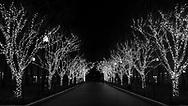 Seasonal decorations at Columbia University