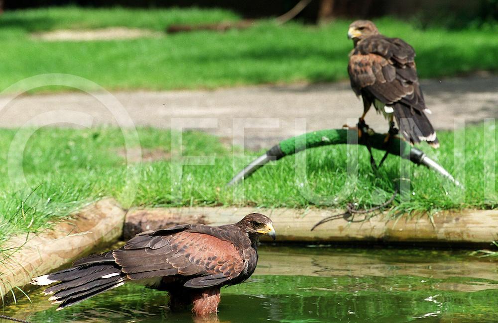 fotografie frank uijlenbroek@1999/frank uijlenbroek.990628 ommen ned.stekkenkamp bert bruil .na de training gaan de vogels in bad