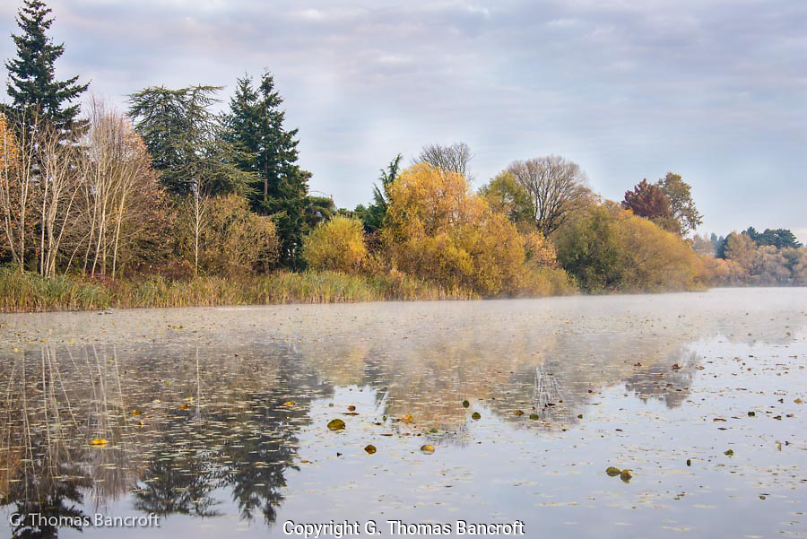 The fog drifted across the water on Green Lake creating a tranquill atmosphere to the early morning.  The reflections were partially visible through the mist.  It was fun to sit a while and watch the mist gradually drift away.