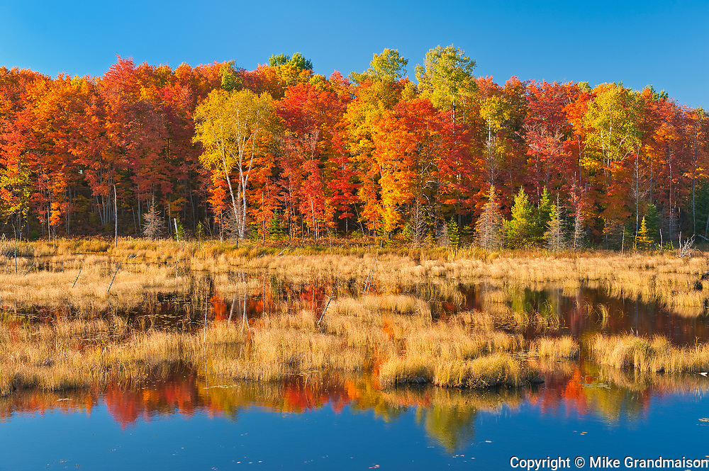 Deciduous forest in autumn colors on Anderson Lake<br />