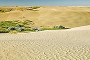 Sand dunes<br /> Great Sand Hills<br /> Saskatchewan<br /> Canada