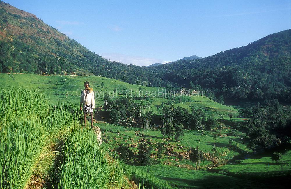 Farmer looking over terraced rice fields...Rupaha, near Uda Pusselawa...2002