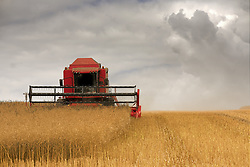 July 21, 2019 - Combine Harvester, North Yorkshire, England (Credit Image: © John Short/Design Pics via ZUMA Wire)