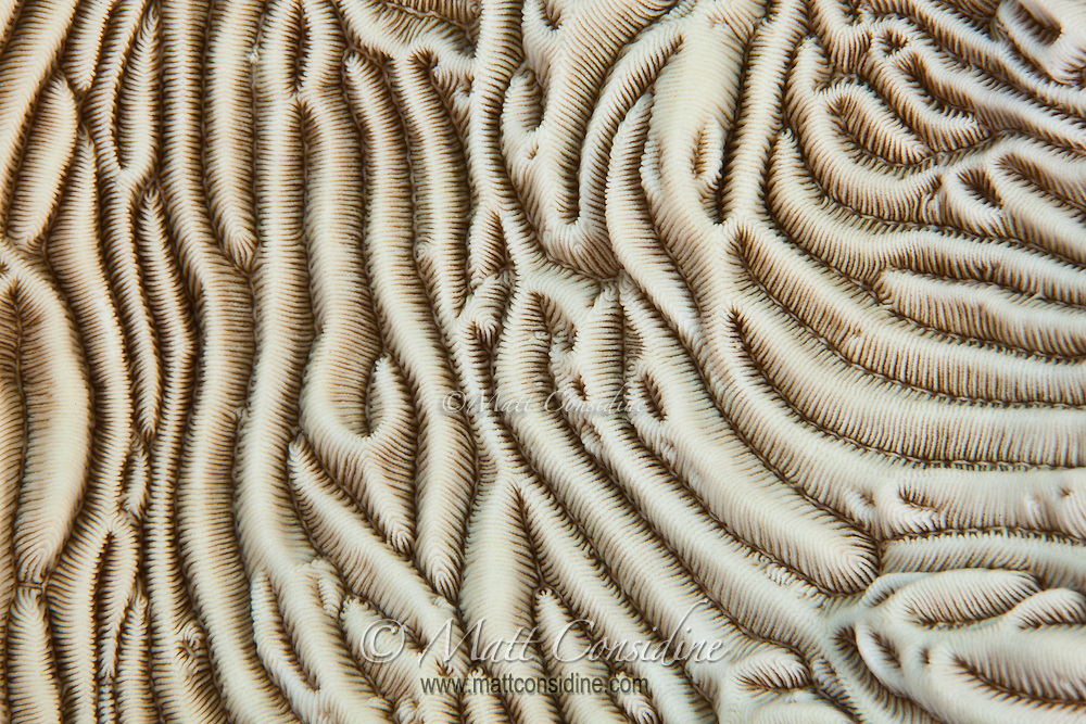 Coral Abstract Macro of hard coral terrain, Palau Micronesia. (Photo by Matt Considine - Images of Asia Collection)