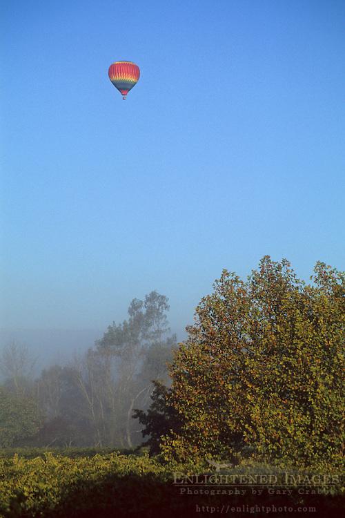 Hot air balloon over vineyard along the Russian River, near Oakville, Napa Valley, Napa County, California