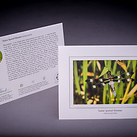 The Twelve Spotted Skimmer is a native dragonfly found in NH near lakes, ponds, marshes. <br /> <br /> Artemis Photo Greeting Cards featuring NH native flora and fauna and historic sites. The cards are made exclusively in NH made from 100% FSC recycled paper, manufactured with wind and water power, and are archival acid free paper. Each card includes details on the back about the image, including interesting anecdotes, historic facts, conservation status, and recipes.