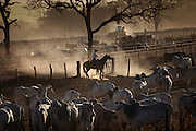 A rancher takes care of cattle at CMA (Cia Agropecuaria Monte Alegre) confinement farm, a partner with Minerva Foods in Barretos, Brazil, Tuesday, Aug. 20, 2012. Brazil is on a quick path to become a global power. Rising economy, big infrastructure projects, an emerging and eager consuming middle class and the booming national industry are the evidences and consequences of the wealth in the southern nation. But the often hidden source of all this wealth falls far from the luring Rio beaches or the Kolkata-New York mix that Sao Paulo is. Behind texan hats and a similar attitude the countrymen display their power through a myriad of projects, festivals and behavior visually analyzed here.