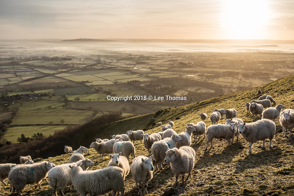 Malvern Hills, Worcestershire, UK. 30th January 2018.  A cold and frosty sunrise on the Malvern Hills. Pictured: Sunrise and sheep graze on the Malvern Hills near to British Camp. // Lee Thomas. Tel. 07784142973. Email: leepthomas@gmail.com www.leept.co.uk (0000635435)