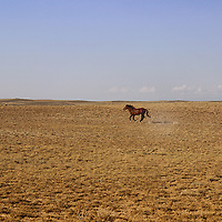 BENJAMIN'S PORTFOLIO<br /> <br /> <br /> &copy; Equus ferus- Wild Horse Photography 2015 <br /> <br /> **To purchase, click the little shopping cart above and it will take you to the print ordering page. All sizes and print types are available. If you don't see the size or type of print- send us an email and we will make it happen (Click the &quot;i&quot; above to contact us).