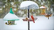 Winter Storm Jonas 2016