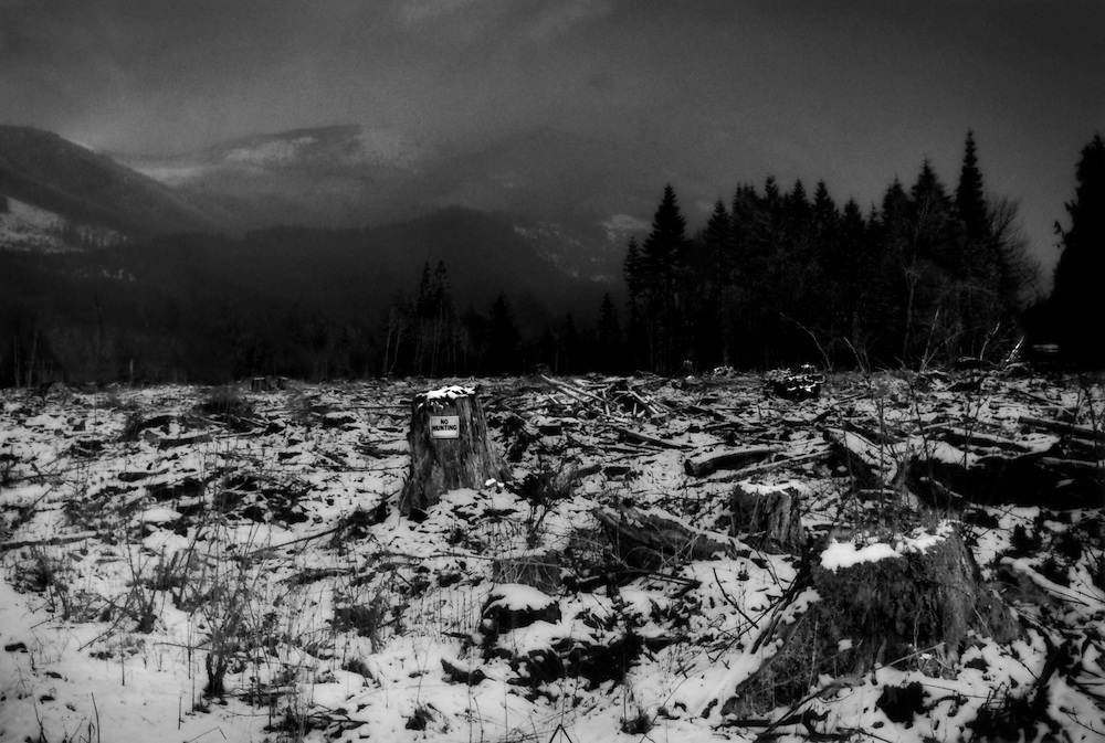 """No hunting, but clear cutting an entire forest is fine.  In Washington and Oregon, only 13% of the original old growth forest remains, mostly because of logging in the 19th, and 20th centuries.   Clear cutting is the method of choice because it saves time and money, and, unlike in the tropics, the soil is deep enough for the creation of tree plantations using native species.  Still clear cutting greatly increases the number of landslides, flooding in a rain-prone region and greatly reduces bio-diversity in the environment.  Monoculture forests worldwide have been called """"green deserts"""" for their lack of bio-diversity."""