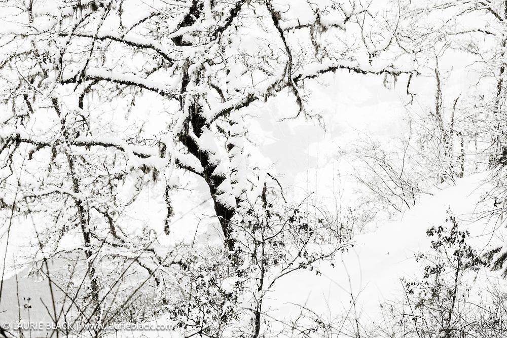 B&W winter landscape fine art photo 3
