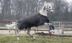 Cornado NRW<br /> Sportpferde Ehning - Borken 2018<br /> © Hippo Foto - Tiffany Van Halle<br /> 02/04/2018