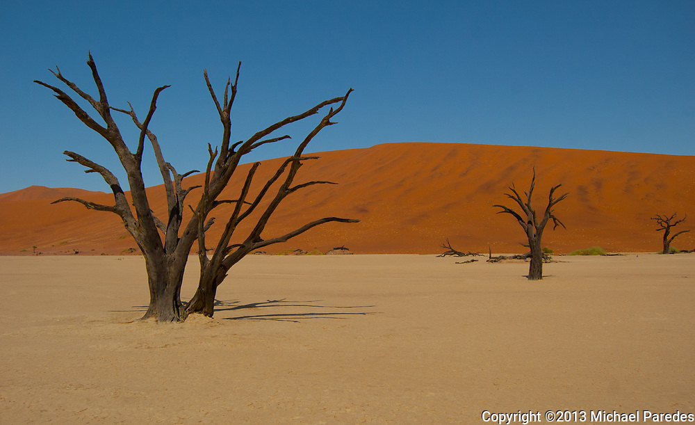 Trees in a riverbed that ran dry forever, Namibia